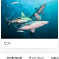 サメの鳴き声ってわかる